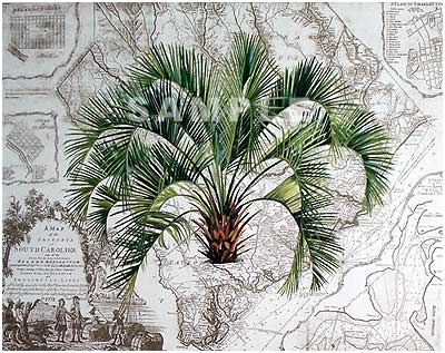 Palmetto State Painting Print By Artist Cherrie Nute